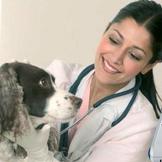 Program za veterinu